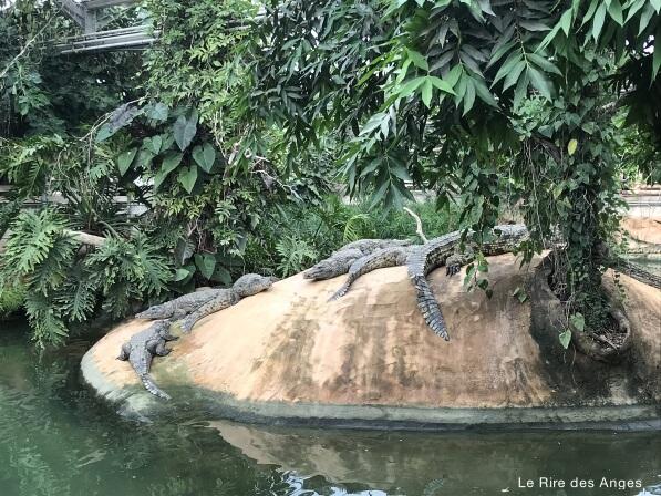 ferme crocodiles
